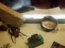 Inox Kapell, Insektensammlerstücke