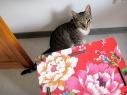 KatzenCafe-05-11.23