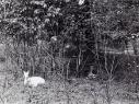 Tiergehege 1955