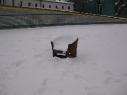 Winterwohnsitz am Columbiadamm (Gabriele Kantel)