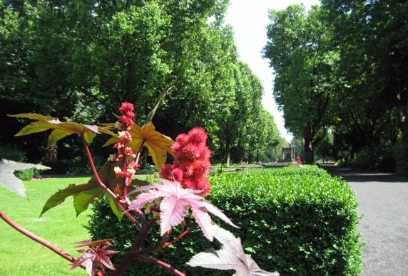 Der Schulenburgpark (Foto: Cornelia Saxe)