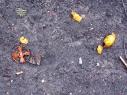 Fliegende Orangen