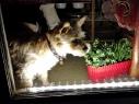 13-10 Hund im Fenster
