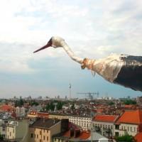 Ein Vogel über Neukölln