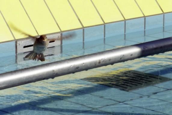 Sommerbad Neukölln (Columbiabad)