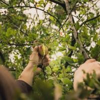 Obstgarten Hasenheide