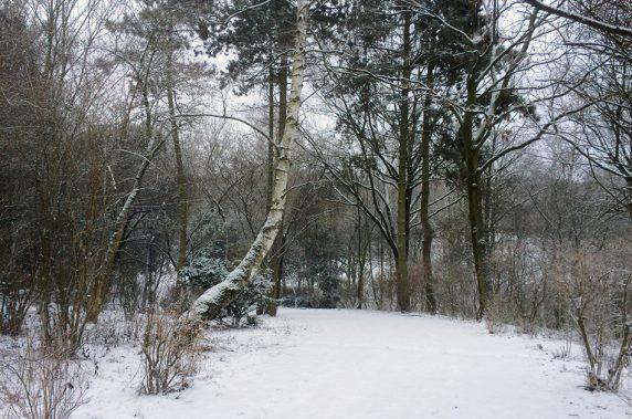 Die Rixdorfer Höhe